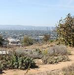 Native Plant Garden @ Baldwin Hills Scenic Overlook