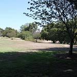 South Coast Botanic Garden Amphitheater Lawn 2