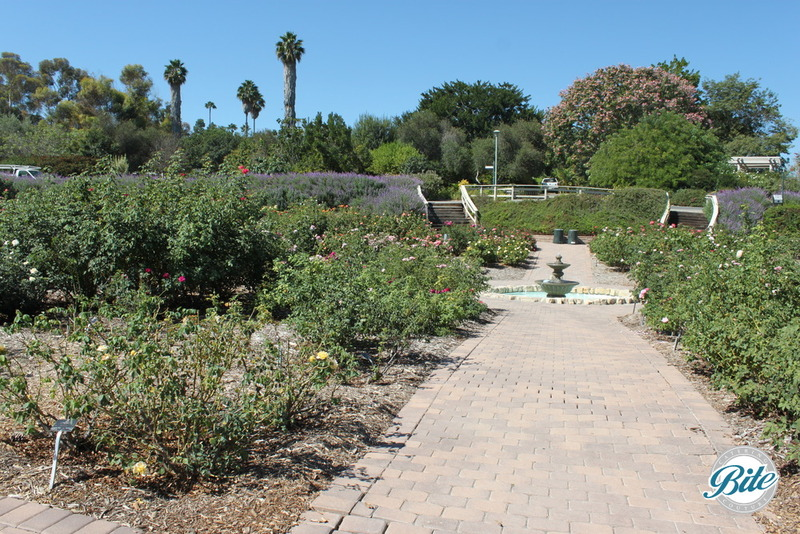 View of the rose garden and fountain at South Coast Botanic Garden