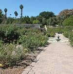 Rose Garden at South Coast Botanic Garden