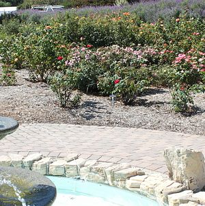 Closeup: Rose Garden at South Coast Botanic Garden
