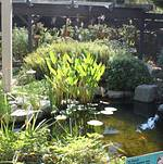 ... South Coast Botanic Garden Garden Entrance SCBG Frances Young Hall SCBG  Koi Pond ...