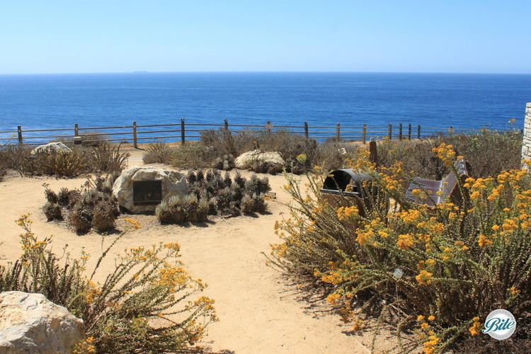 Garden showcasing native and drought resistant plants with ocean view
