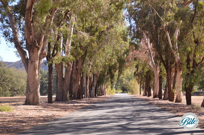 Beautiful driveway covered with trees leading up to the venue
