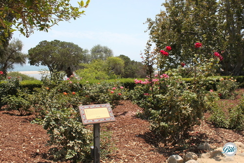 Rose garden overlooking the Pacific Ocean in Malibu at Adamson House