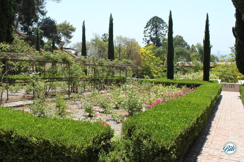 Rose Gardens in bloom in the upper gardens at the Wattles Mansion