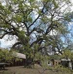 Barn and Tree @ Paramount Ranch