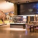 Dine with the Elephants