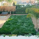 Studio 1342 Grass Lawn